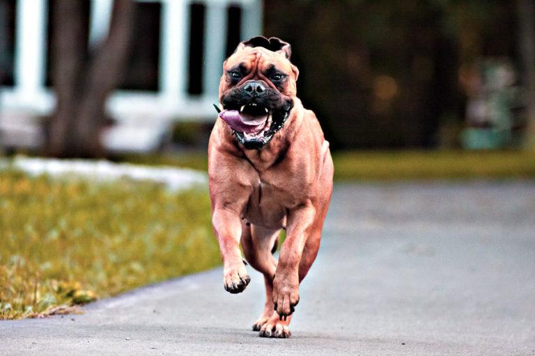 photo chien de garde