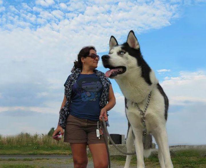 photo chien géant